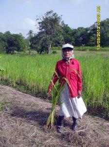 Marie Ronowikromo met een rijstplant voor haar rijstveld.