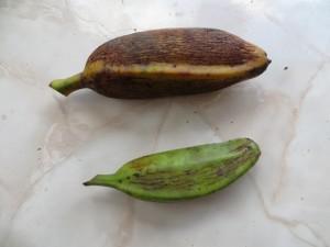 oponto (Small)